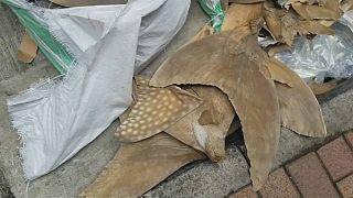 العثور على زعانف قروش مهددة بالإنقراض على متن الخطوط الجوية السنغافورية