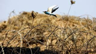 Barbed wire fence between Israel and Gaza