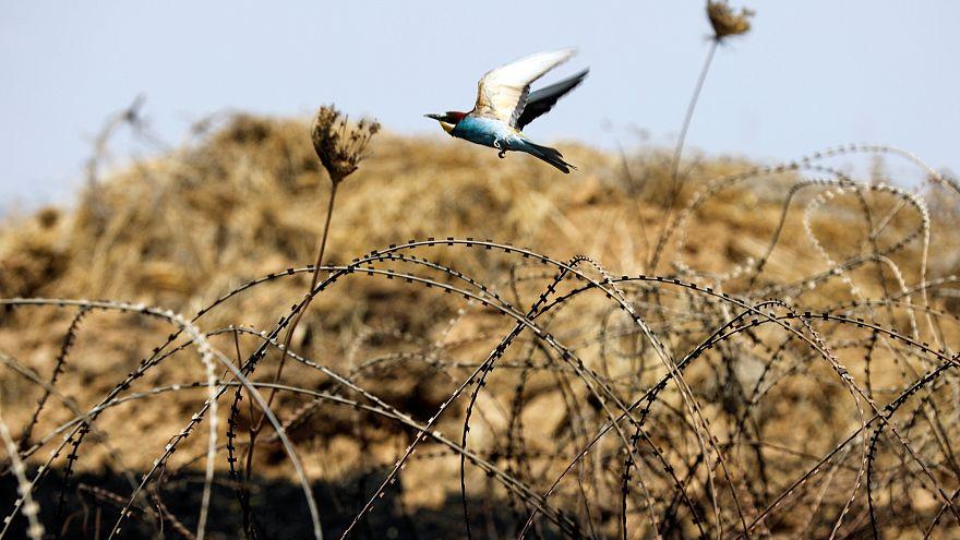 """Protection internationale des Gazaouis : le """"non"""" américain"""