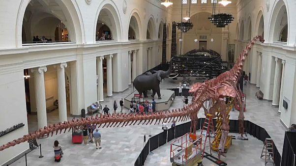 ویدئوی تایملپس ساخت اسکلت بزرگترین دایناسور