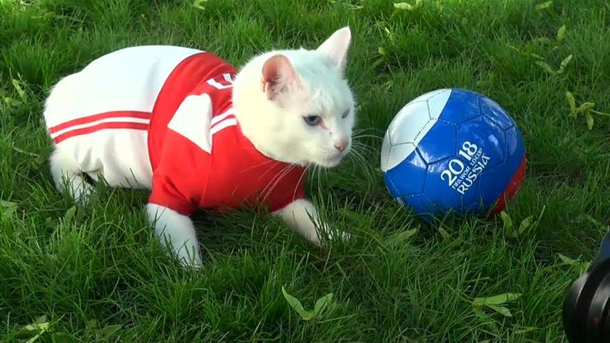 Miau! Achilles, das WM-Orakel
