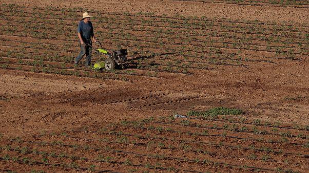 EU-büdzsé: sokat bukhatnak a magyar gazdák