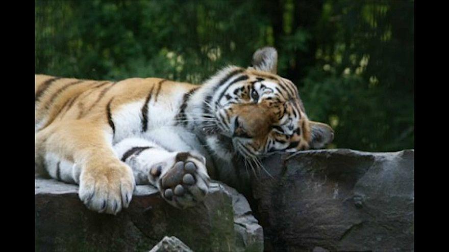 Capturados os animais que fugiram do zoo na Alemanha