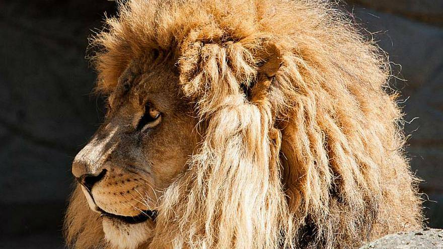 False alarm after five big dangerous cats 'escape' from German zoo