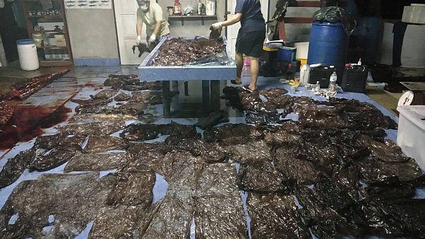 """Évi 300 tengeri állatot """"öl meg"""" a műanyag a thaiföldi vizekben"""