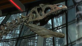 Dev dinozor iskeleti Fransa'da açık artırmayla satıldı
