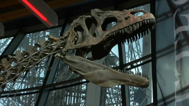 بيع هيكل ديناصور عمره 150 مليون سنة بمبلغ مليوني يورو خلال مزاد بباريس