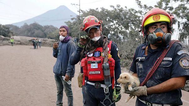 Bombeiros ajudam cachorro entre as cinzas do Vulcão de Fogo