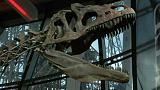 An unidentified dinosaur sells for over 2 million Euros at Paris Auction