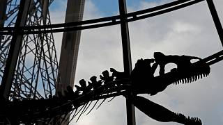 Das Dino-Skelett wurde im Eiffelturm versteigert.