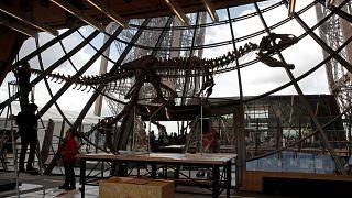 2 млн евро за скелет динозавра