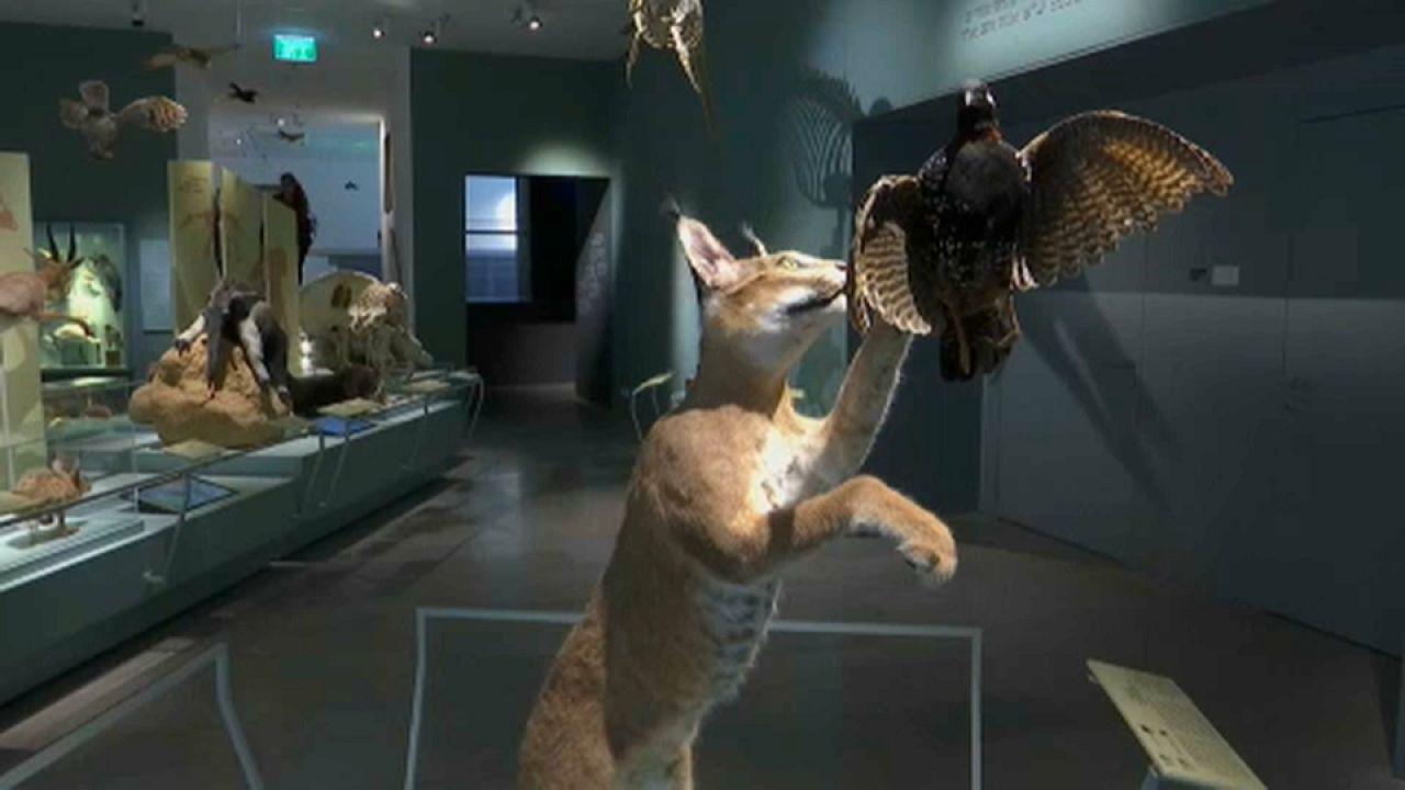 Le Retour à Tel Aviv d'animaux disparus