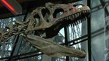 """Un dinosaure """"inconnu"""" acheté 2 millions d'euros"""