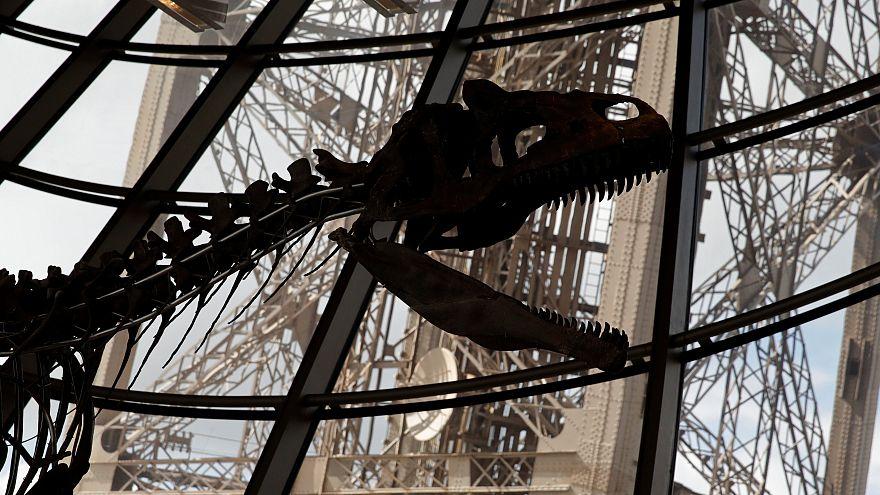 Parigi, all'asta un dinosauro