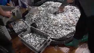 Világnap az illegális halászat ellen