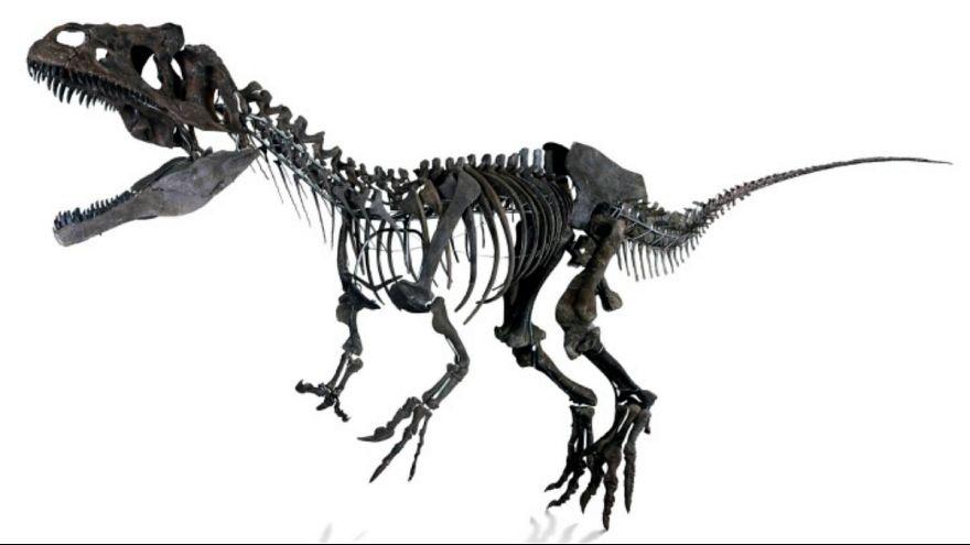 Imagem do fóssil vendido esta semana em Paris pela Aguttes