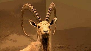 Bienvenidos al Museo Steindhardt de Historia Natural de Tel Aviv