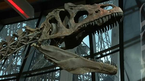 La venta de un dinosaurio desata las críticas de los paleontólogos