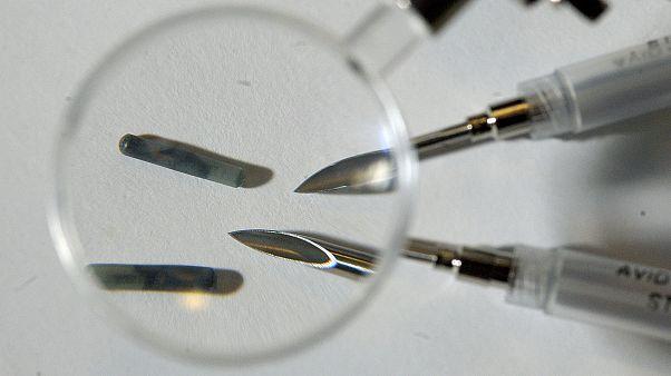 Mikrochips von rund 12 mm Länge werden unter die Haut gepflanzt