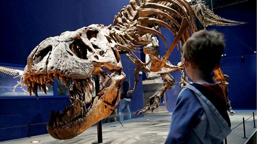 الهيكل العظمي لتيرانوصور عمره 67 مليون سنة - المصدر: رويترز.