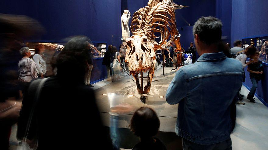 Trix, t-Rex de 67 millions d'années, est exposé à Paris