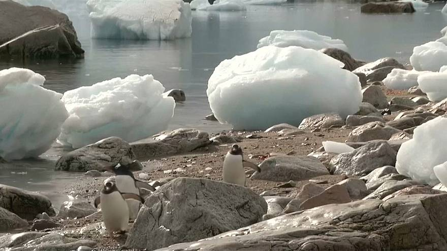 Du plastique jusqu'en Antarctique