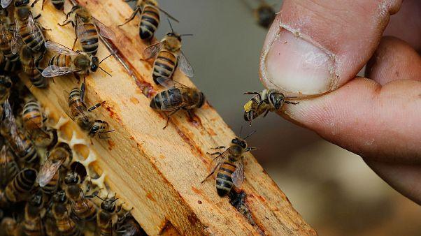 Manif apiculteurs à Paris: mortalité record des abeilles