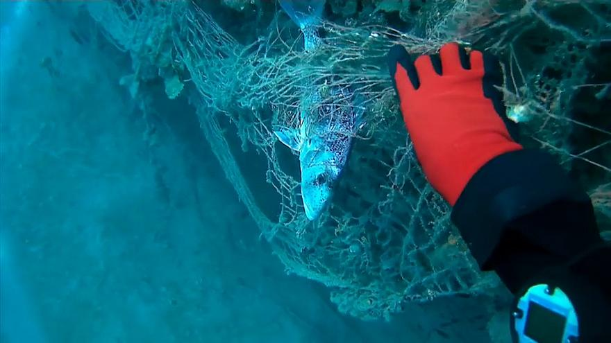A diver rescues a fish trapped in a discarded fishing net