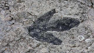 Gizemli şekiller dünyanın en eski ayak izi olabilir