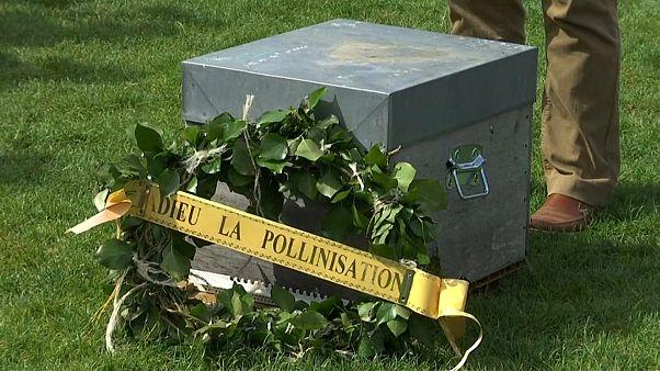 Beekeepers mourn declining bee numbers