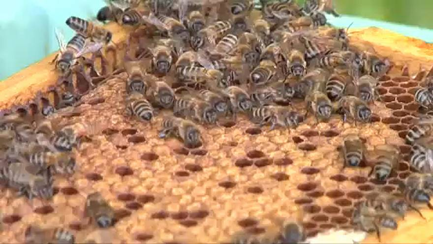Tüntetés a méhekért
