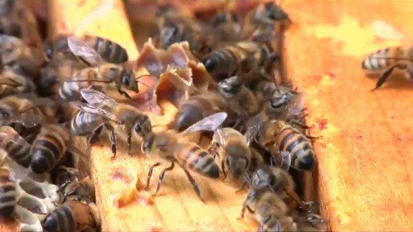 """Apicultores franceses: """"Salvem as abelhas!"""""""