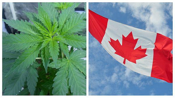 کانادا یک گام به مصرف قانونی ماریجوانا نزدیک شد