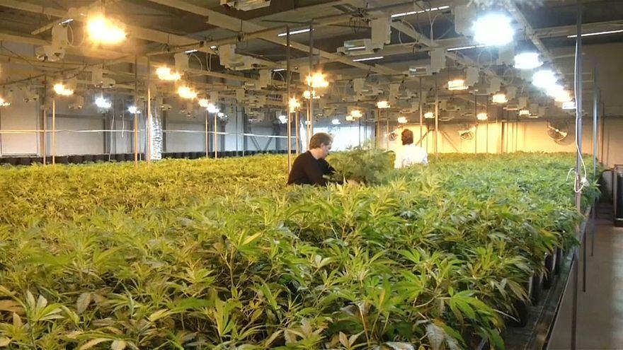 High Times in Kanada: Cannabis bald legal