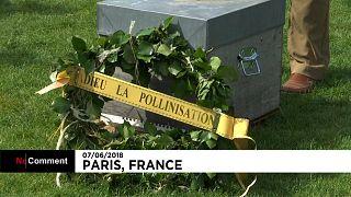 Surmortalité des abeilles : les apiculteurs français se mobilisent