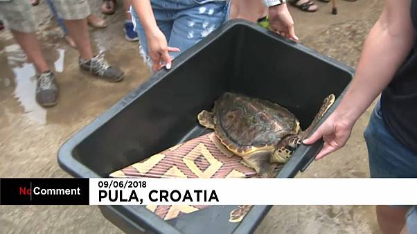 Nouveau lâcher de tortues marines au large de la Croatie