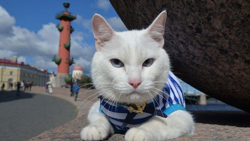 Médium macskát edzenek az oroszok a vébére