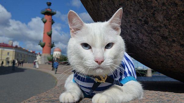 Este gato sordo aspira a suceder al pulpo Paul como oráculo  del Mundial