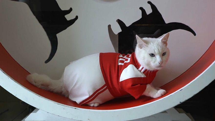 Aquiles, o gato adivinho do Mundial