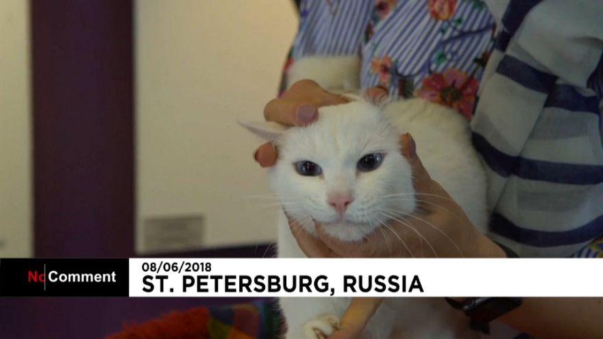 گربه روس جام جهانی را پیشبینی می کند