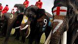 الفيلة تمارس الرياضة لتوعية التايلانديين بعدم شرعية المراهنات