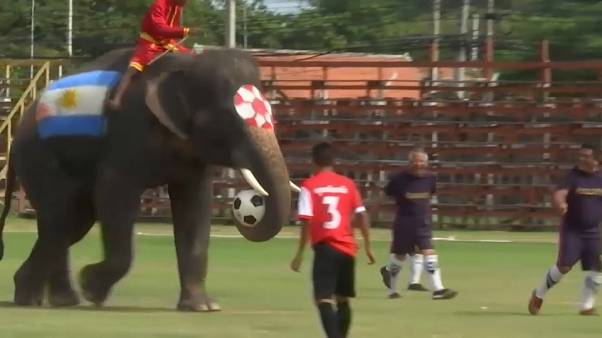 Kurios: Fußballspielende Elefanten