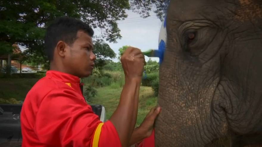 Thai elephants kicked off an anti-gambling campaign in Thailand