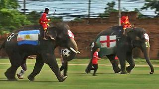 تایلند؛ فیلها برای مقابله با شرط بندی جام جهانی فوتبال بازی کردند
