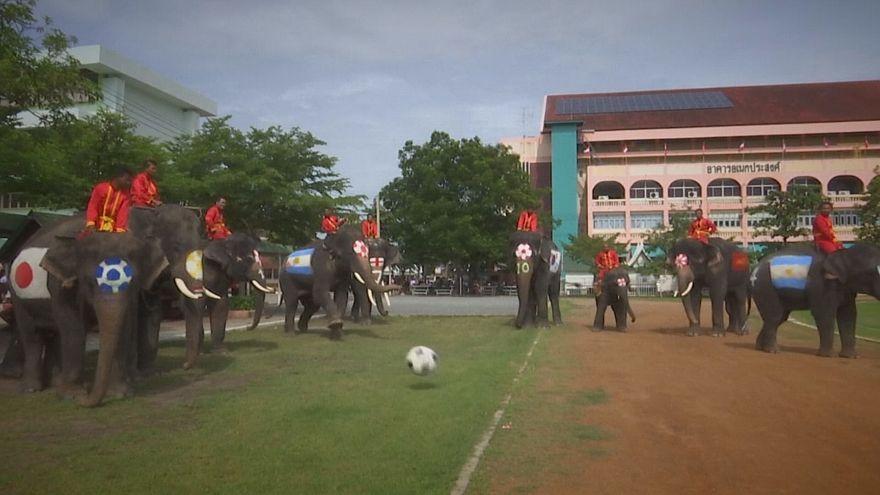 الفيلة تتبارى في تايلاند لمكافحة حمى المراهنات