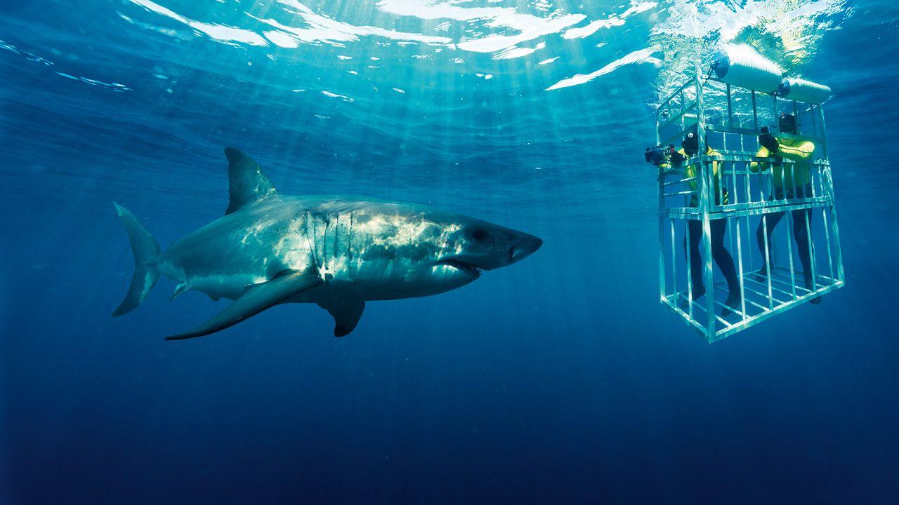 L'Afrique du Sud, à la rencontre du grand requin blanc
