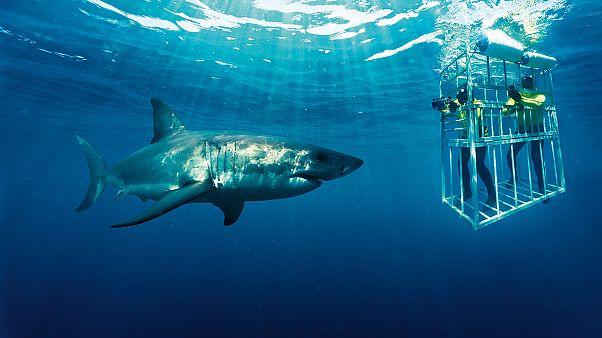 África do Sul, ao encontro do grande tubarão branco
