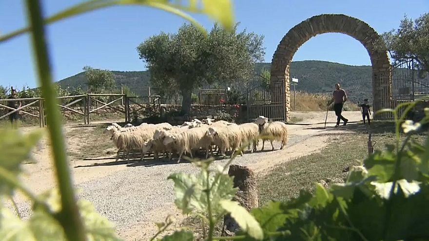 Il 2018 è l'anno del cibo italiano: dalla Sardegna i sapori bio