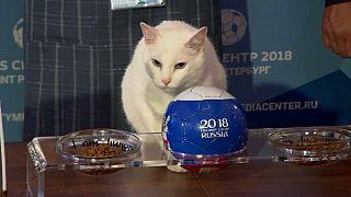 El gato Aquiles apuesta por Rusia en el Mundial