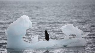En Antarctique, la glace fond encore plus vite